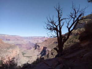 Dead Tree on Bright Angel Trail