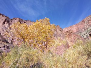 Fall Colors in the Grand Canyon