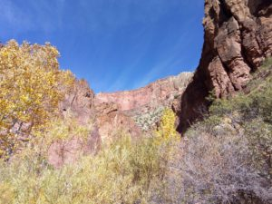 Fall in the Canyon