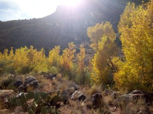 Golden leaves in the Grand Canyon