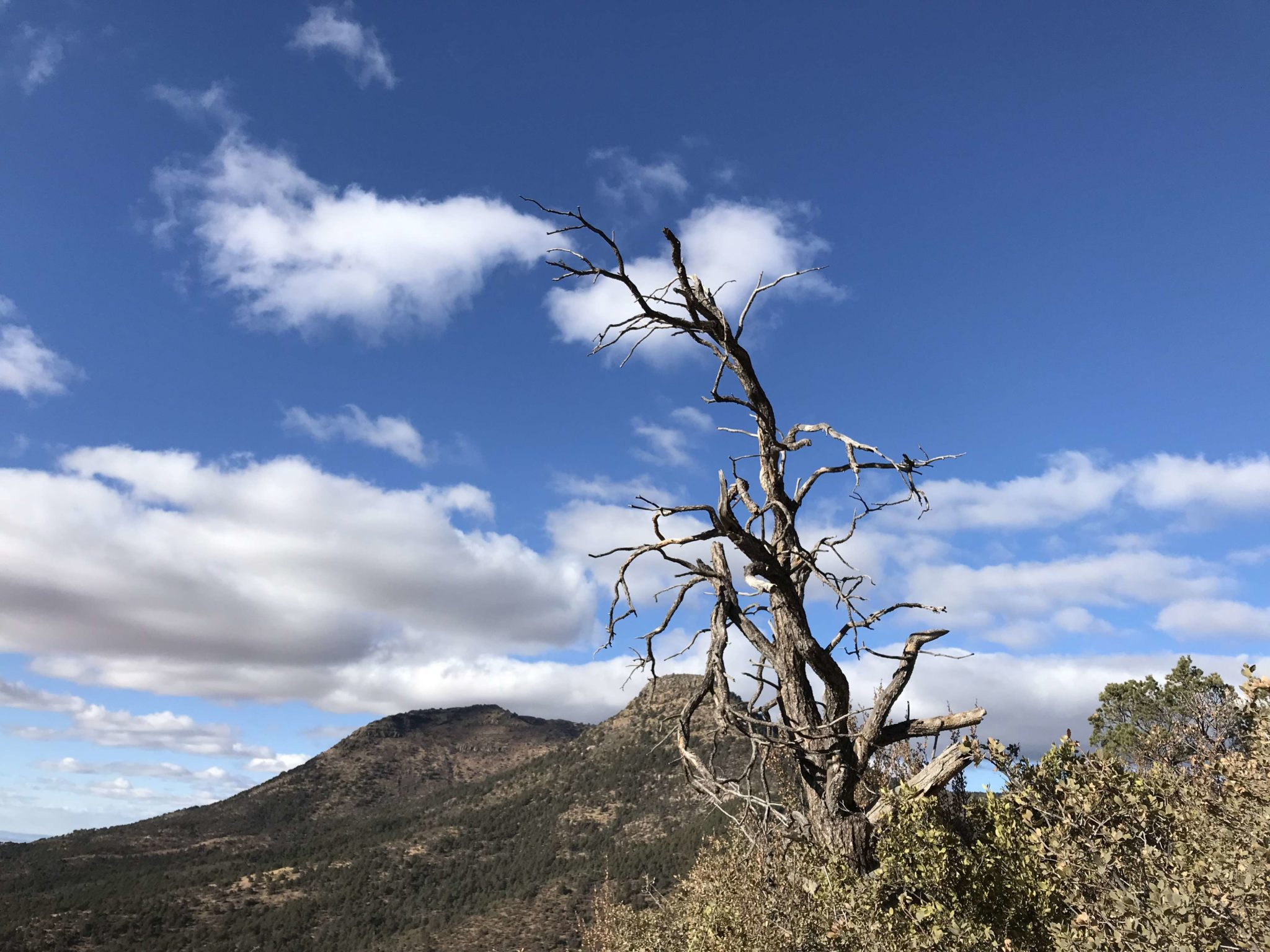 fascinating dead trees
